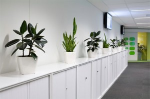 officeplants-gallery2